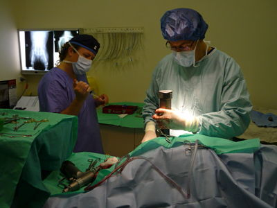 Specialist Dr Eugene Buffa performing a procedure at St Ives Veterinary Surgery